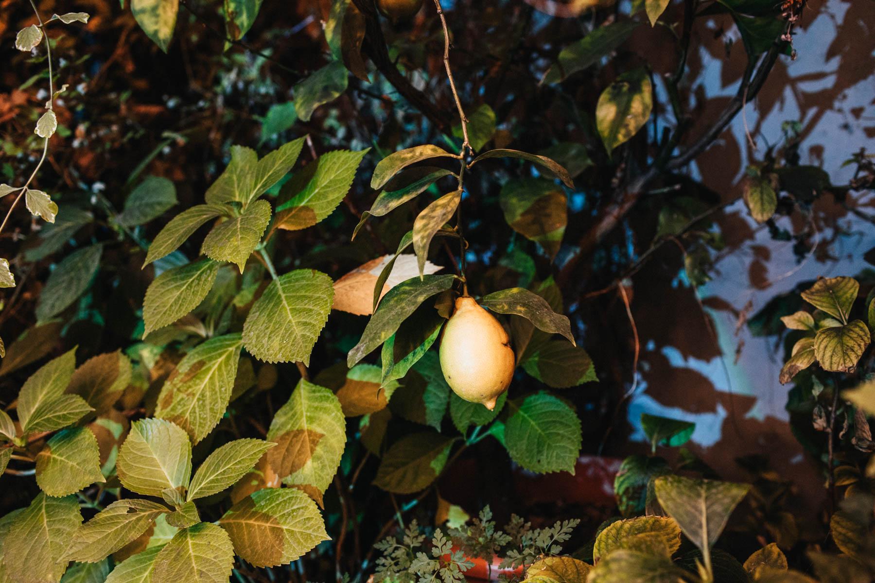 stara oranzeria warszawa -165